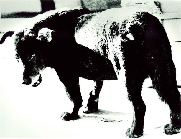 Daido Moriyama, Misawa, 1971, Gelatin silver print, Courtesy of Taka Ishii Gallery & Caochangdi PhotoSpring