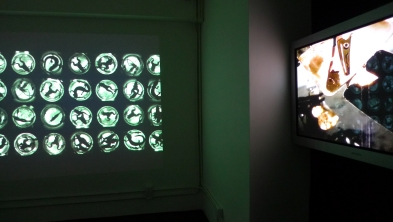 Lu Yang's 'Dictator' and 'Happy Tree' in I/O gallery's latest bio art show.