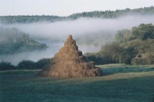 Nikolai Polissky, La Tour, photograph, 2000. Image courtesy of Maison Européene de la Photographie.